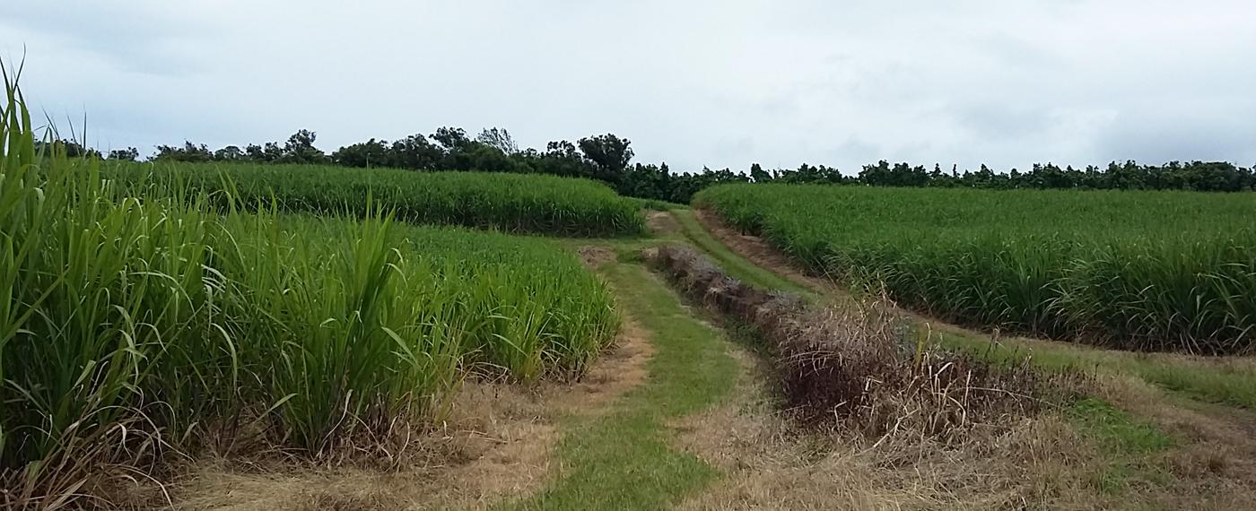 Spécialiste de l'évaluation des biens ruraux et de l'entreprise agricole